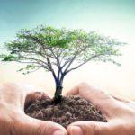 Baum in den Händen: ökologisch Bauen