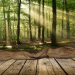 Lichtung im Wald - Holz oder Lehm als ökologische Baustoffe