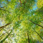 Gut für den Wald: das Plusenergiehaus erzeugt mehr Energie als es verbraucht