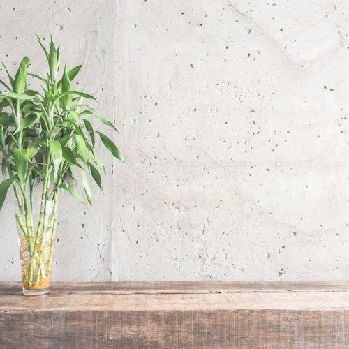 Pflanze vor der Wand