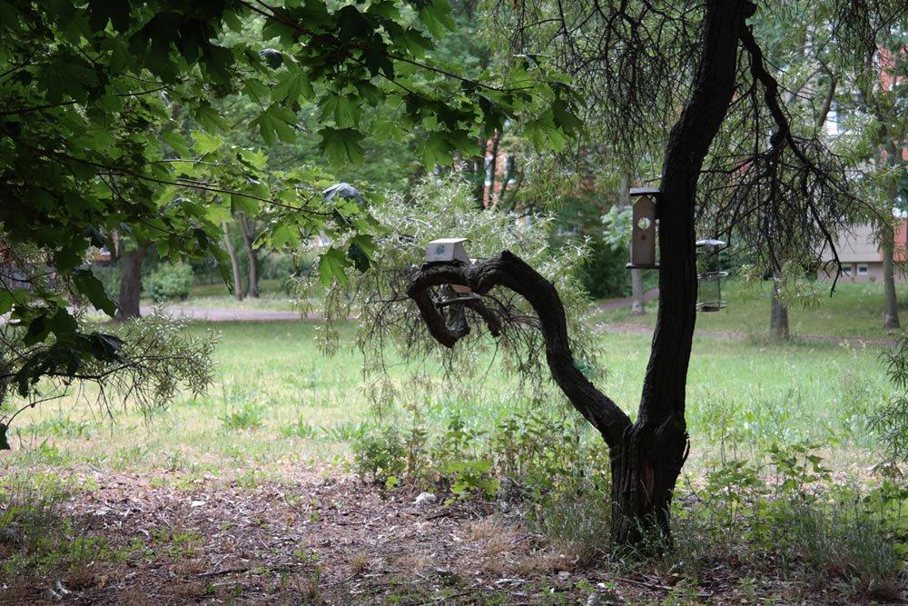 Baumfällungen verursachen ebenfalls Baunebenkosten