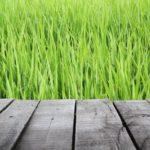 Blick von der Terrasse in den Garten - Wie erfolgt die Eintragung ins Grundbuch?