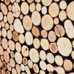 Baumstämme - unterschiedliche Holzarten nebeneinander